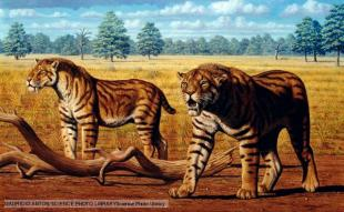 Sabre-toothed cats