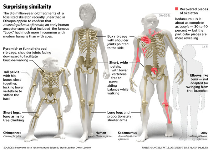 chimpanzee | asperger: the hyposocial human, Skeleton