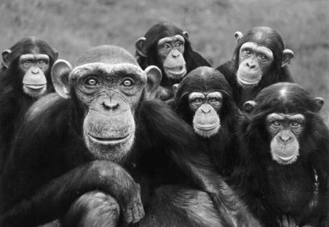 primates3 bw