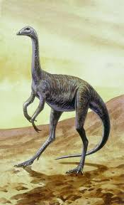 images04FQ9SJTstruthiomimus ostrich mimic