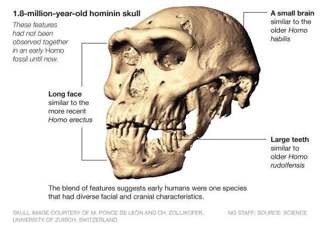 African homo erectus cranial features include: