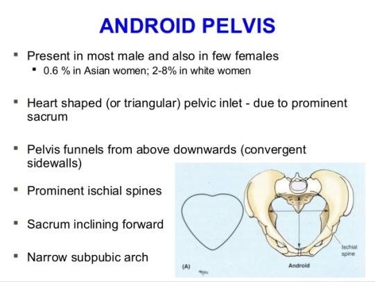 applied-anatomy-of-pelvis-and-fetal-skull-38-638