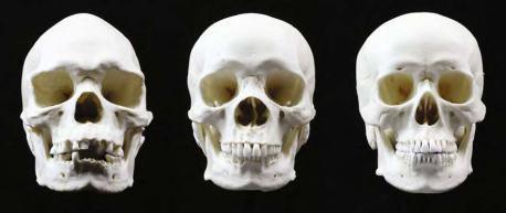 Skull5aboriginal african asian