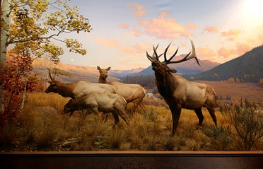 Western landscapes often do look like museum dioramas.