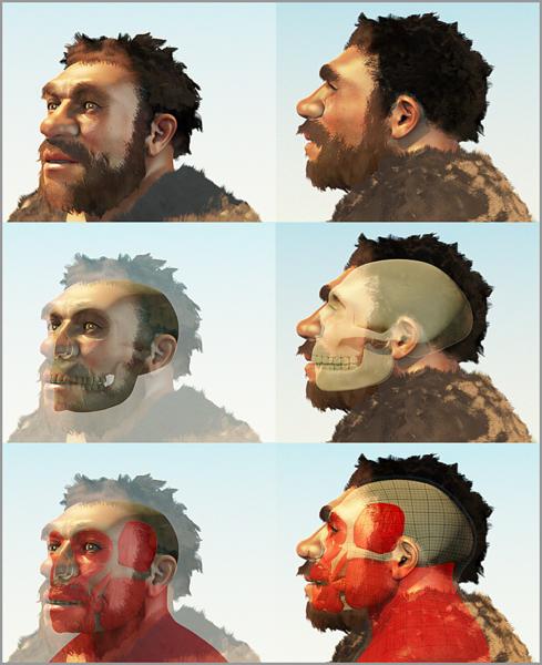 489px-Homo_neanderthalensis_2_cogitas3d