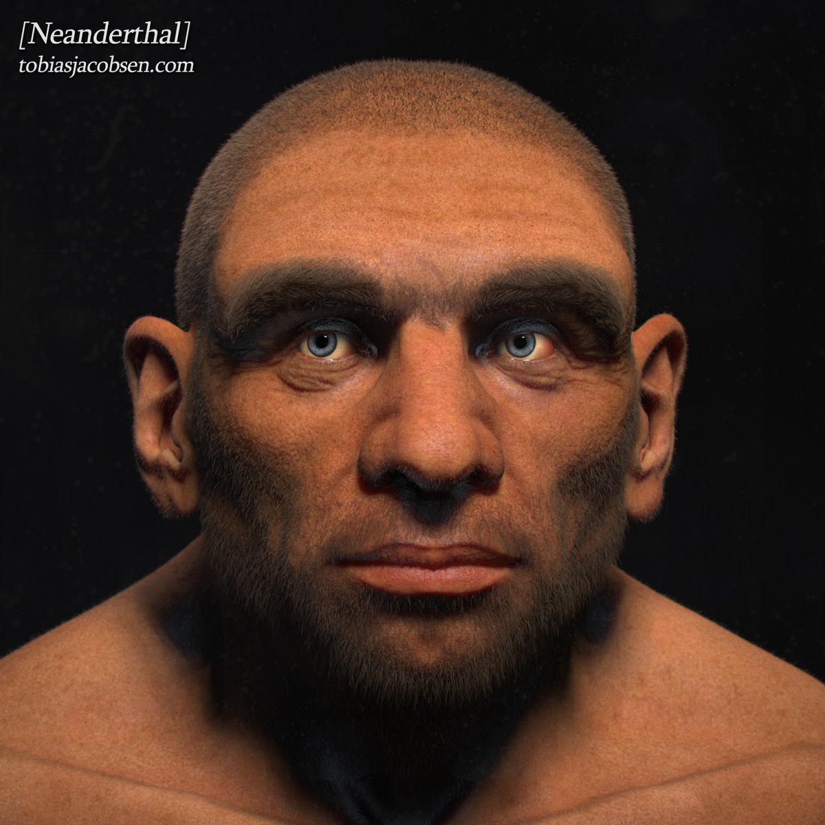 New (to me) Neanderthal Reconstruction   Asperger: The HypoSocial ...