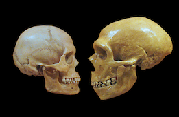 "Claiming that Neanderthals were ""dumb"" is dumb."