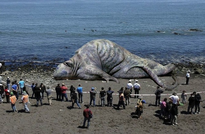 sea_monster_carcasses_found