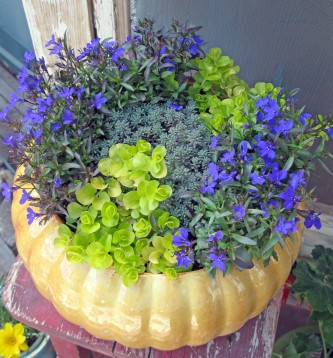 Home is a pot of spring flowers.