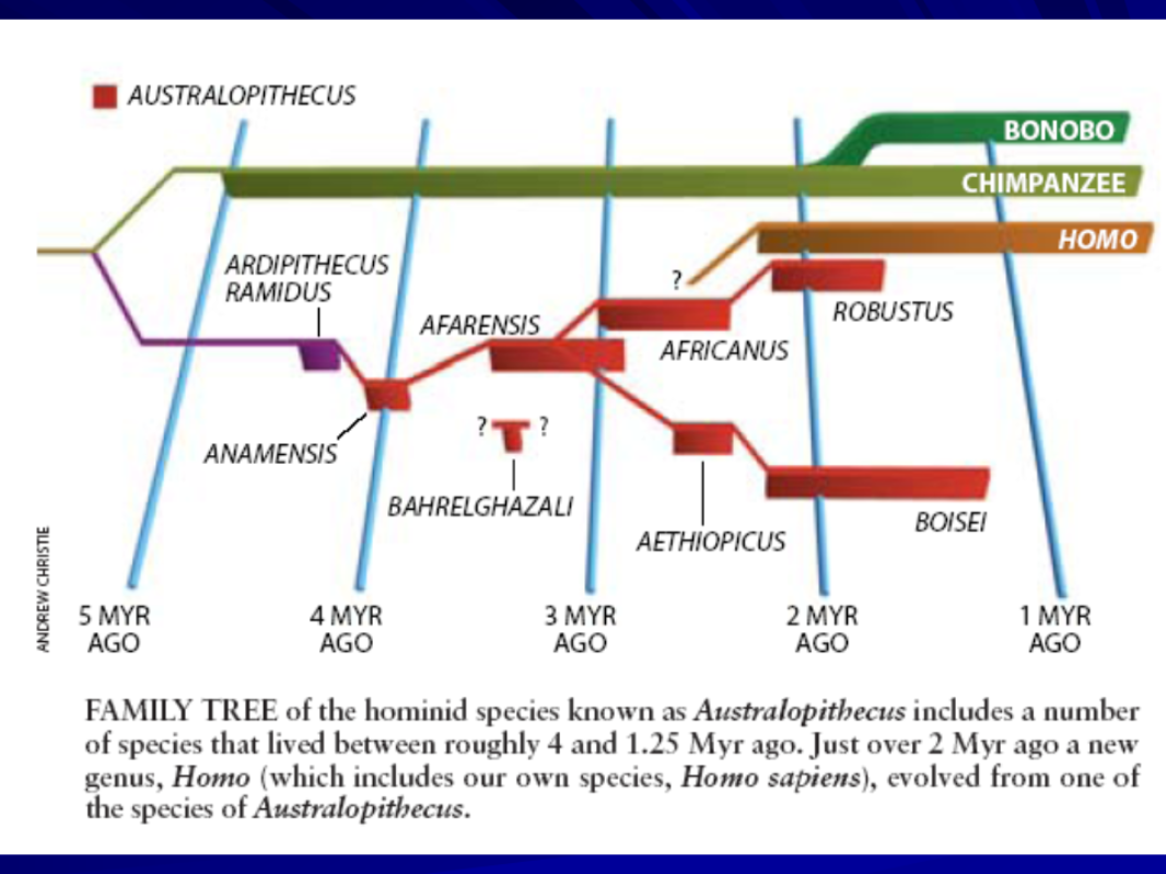 Hominid Evolution Timeline march of man | Asperge...