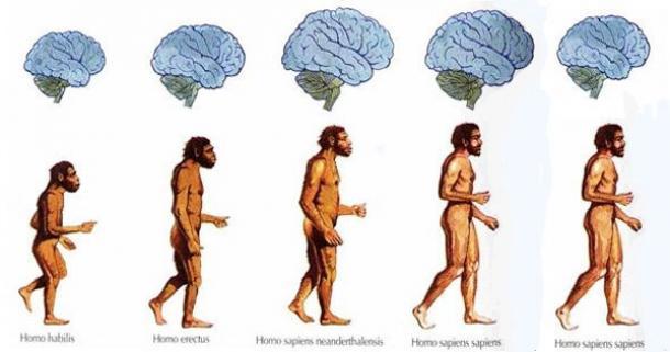 brain-shrinking-humans
