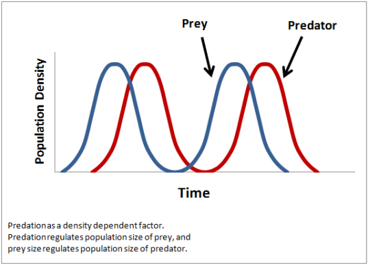 Density_dependence
