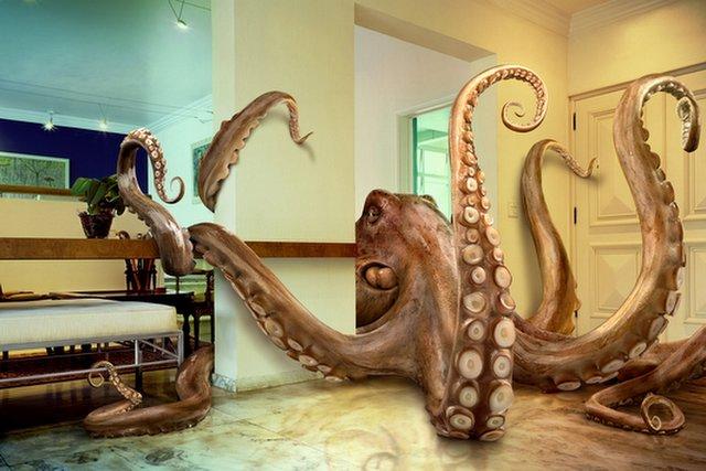 octopus-1-756405