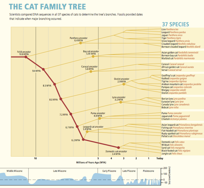 o'brien_evolution CAT