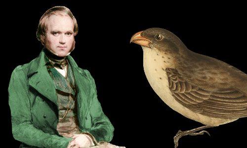 charles-darwin-finch