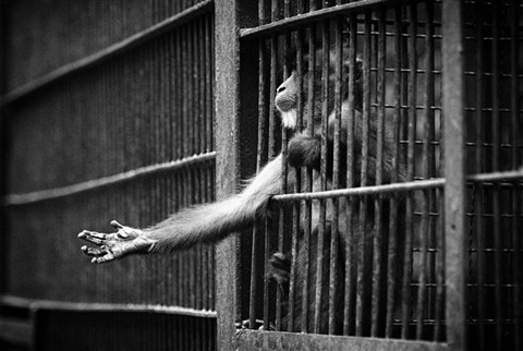 animals-in-zoos-2