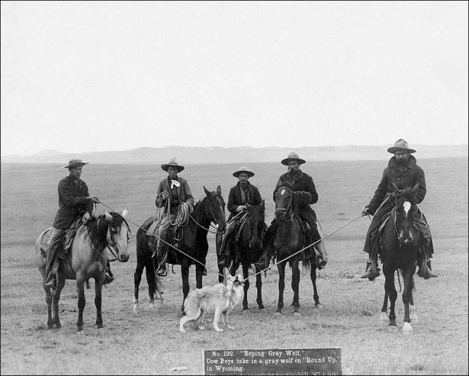 old-west-cowboys-roping-wolf-1887-photo-print-4