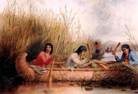 rice-gatherers-eastman
