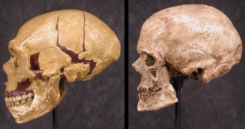neanderthal-and-cro-magnon-skulls