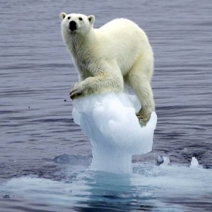 Environmental change drives evolution: Poor Polar Bears? We're in the same precarious position as any other animal.