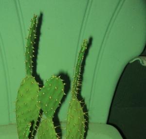 top-cactus-green