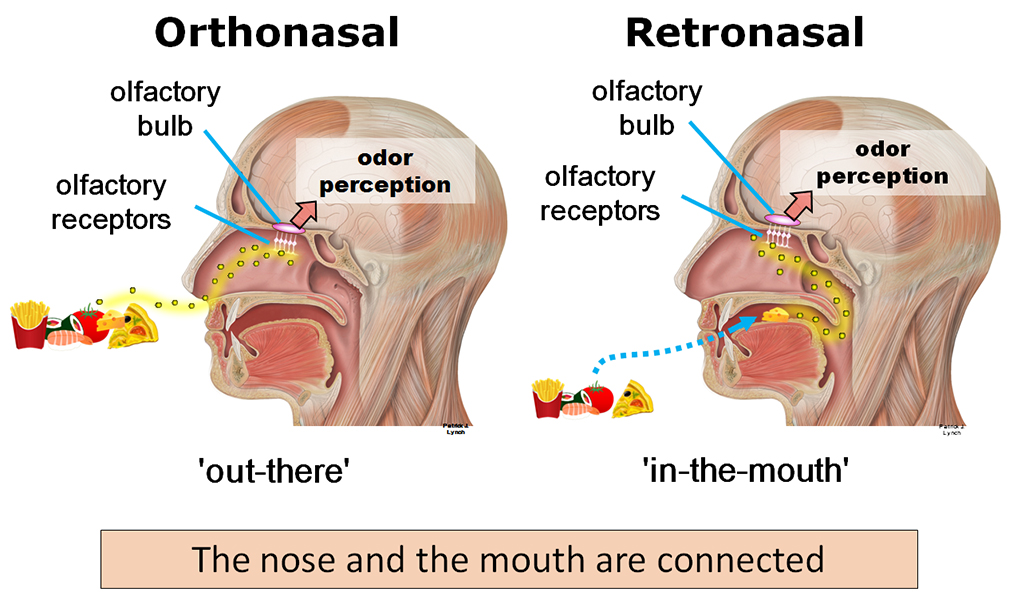 Human Sense of Smell / Better Than We Think? | Asperger: The ...